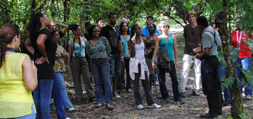group in forrest