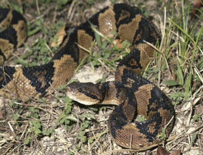 Image result for baby bushmaster snakes